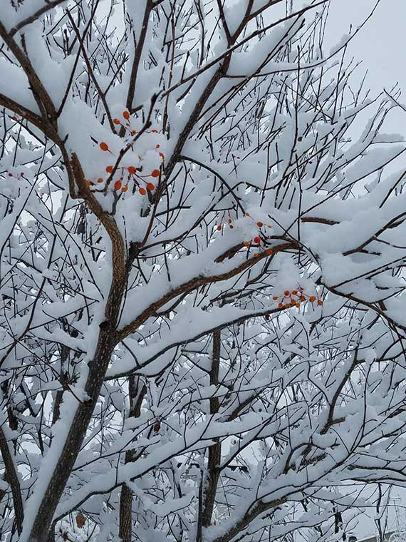 北海道札幌営業所 雪景色